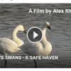 A film by Alex Rhodes