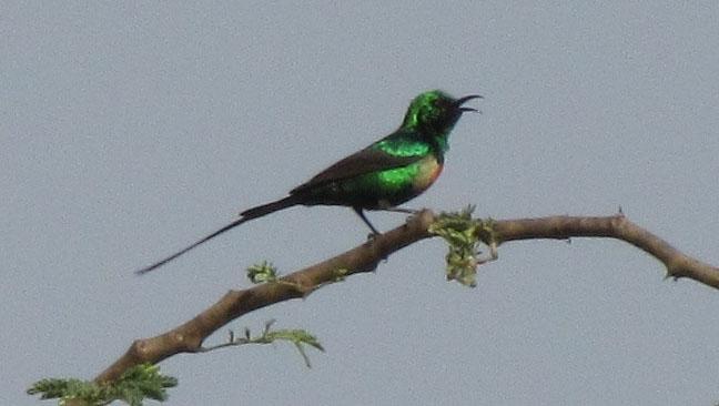 02-08-beautiful-sunbird