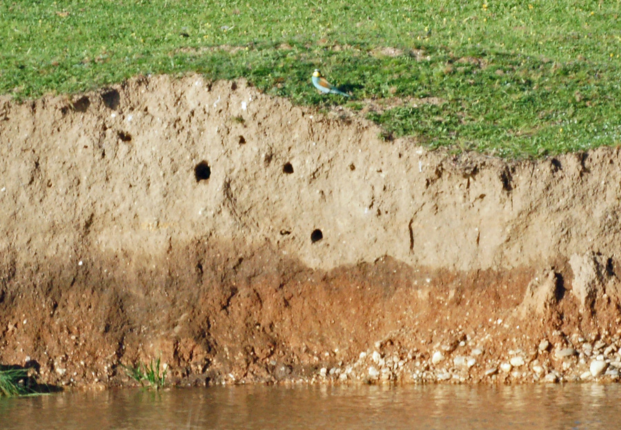 06-23-Bee-eater-colonial-nests
