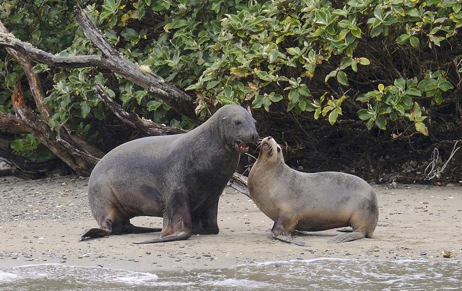 07-09-Hookers-Sea-Lion