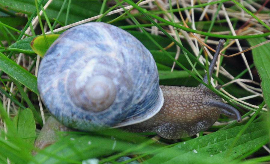 04-02-Snail