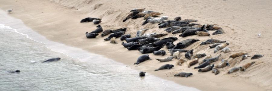 04-03-Seals