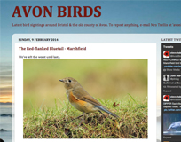 Avon Birds